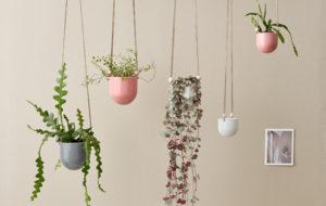 viherkasvit, sisustus, ideat