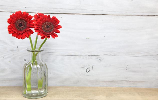 Ilmaa puhdistavat ei-myrkylliset kasvit: Gerbera