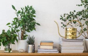 Ilmaa puhdistavat myrkyttömät kasvit