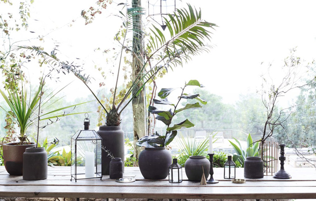 Kasveja pöydällä