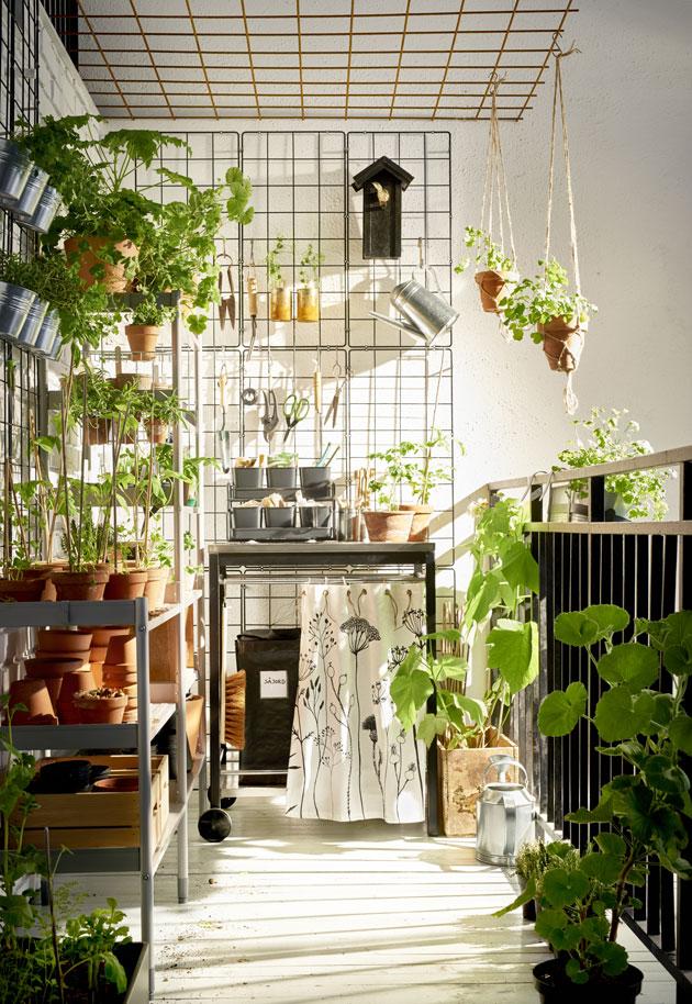 kasveja parvekkeen ristikkoseinällä